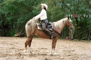 Stage di Equitazione etologica