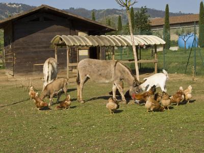 maneggio gi ranch di pistoia ti aspettiamo tra cavalli